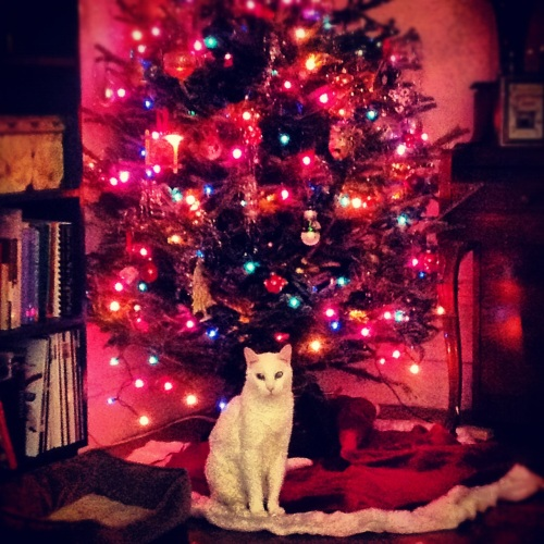 My roommate's cat under our tree.