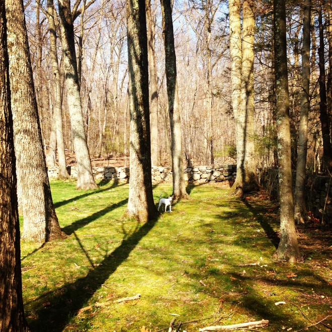 My favorite corner of my childhood property, where I like to walk barefoot and listen to the woodland noises.